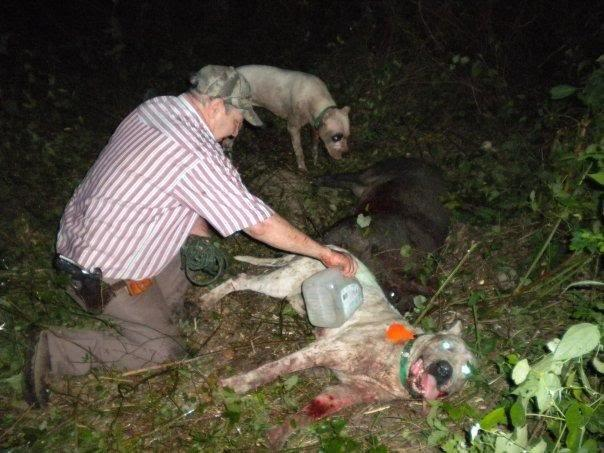 Sugar's Hope Hog Dog Hunting Abuse